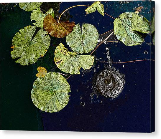 Life Of A Lily Pad 3 Canvas Print by Nicholas J Mast