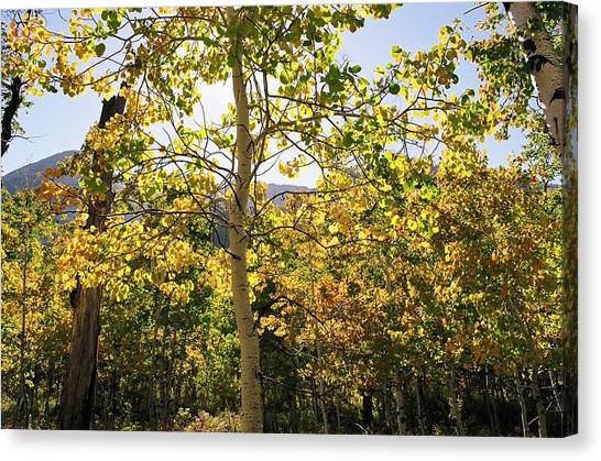 Light And Leaves Canvas Print by Caroline Clark