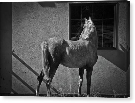Canvas Print featuring the photograph Light And Shadow by Catherine Sobredo