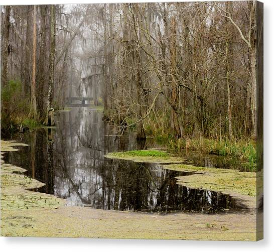 Light Fog On The Swamp Canvas Print