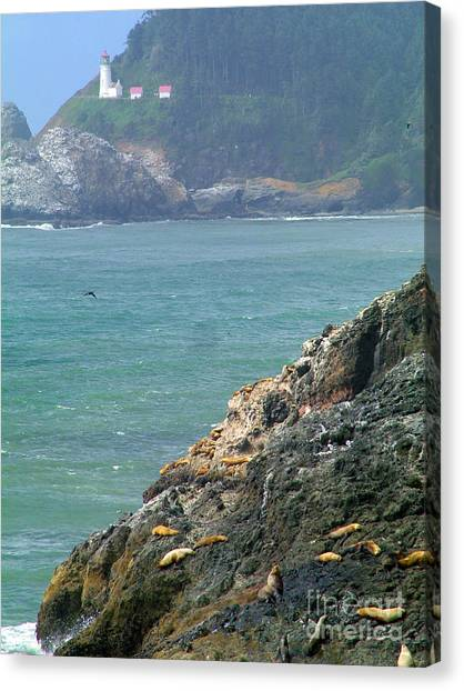 Light House And Sea Lions Canvas Print by Nick Gustafson