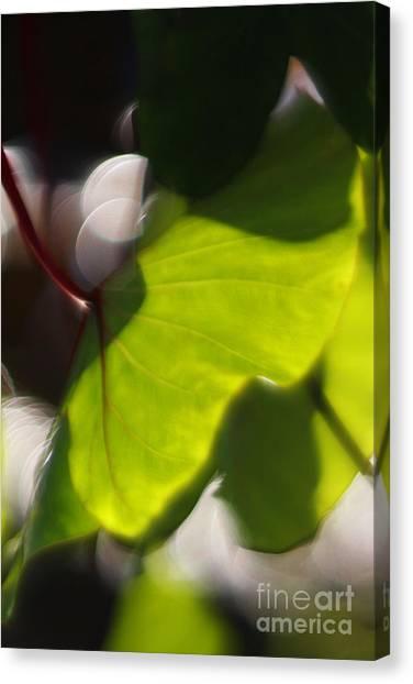 Light I Canvas Print by Katherine Morgan