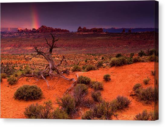 Light Of The Desert Canvas Print