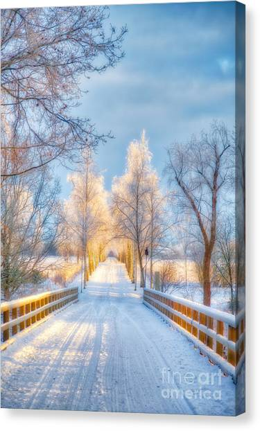 Birch Canvas Print - Light Of Winter by Veikko Suikkanen