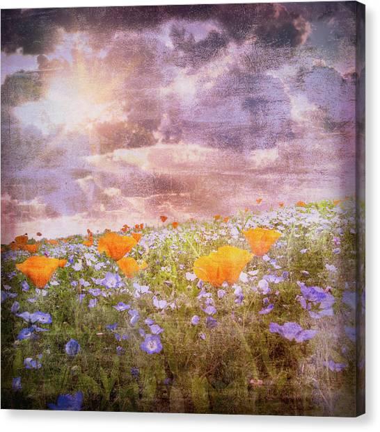 Poppys Canvas Print - Light On The Wildflower Field by Debra and Dave Vanderlaan