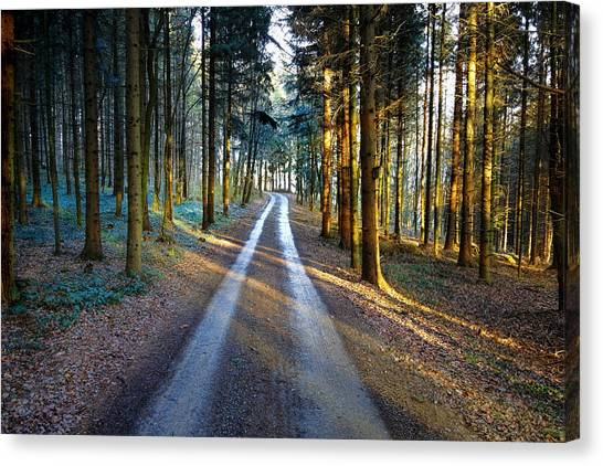Canvas Print featuring the photograph Light Path Crossing In The Woods by Menega Sabidussi