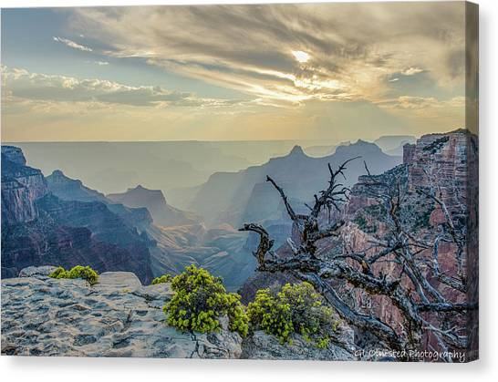 Light Seeks The Depths Of Grand Canyon Canvas Print