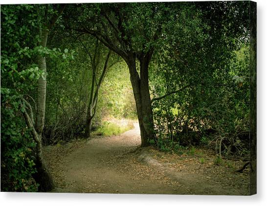 Canvas Print featuring the photograph Light Through The Tree Tunnel by Alison Frank