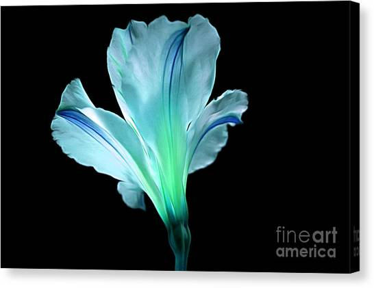 Amaryllis Canvas Print - Light Up Your Soul by Krissy Katsimbras