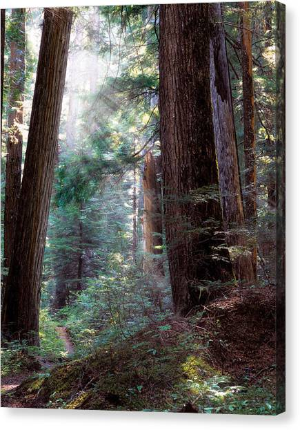 Forest Paths Canvas Print - Lighting The Path by Leland D Howard