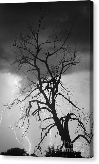 Lightning Tree Silhouette Portrait Bw Canvas Print