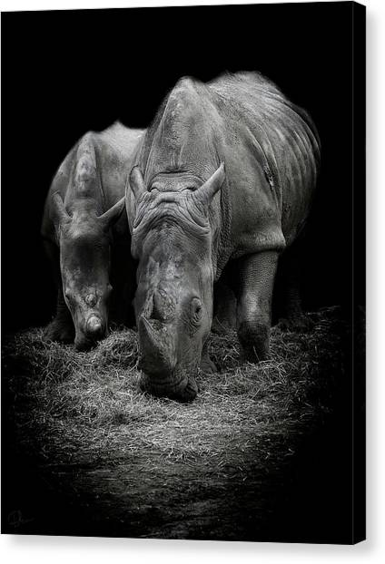 Rhinos Canvas Print - Like Father Like Son by Paul Neville
