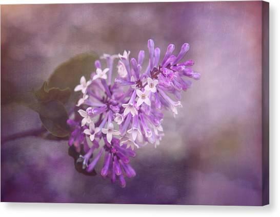 Lilac Bush Canvas Print - Lilac Blossom by Tom Mc Nemar