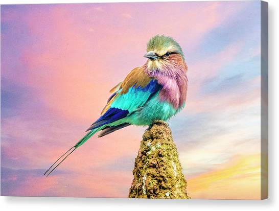Lilac Breasted Roller At Sunset Canvas Print