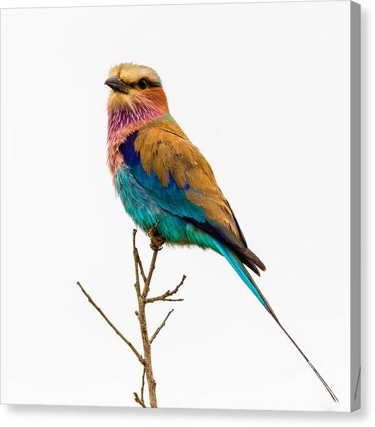 Canvas Print featuring the photograph Lilac-breasted Roller by Stefan Nielsen