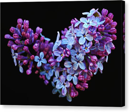 Lilac Heart Canvas Print