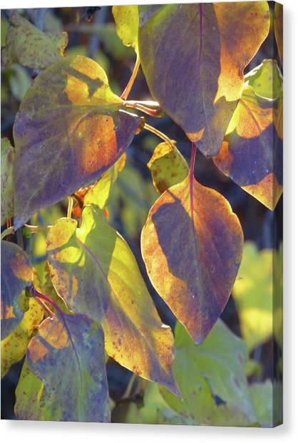 Lilac Leaves Canvas Print