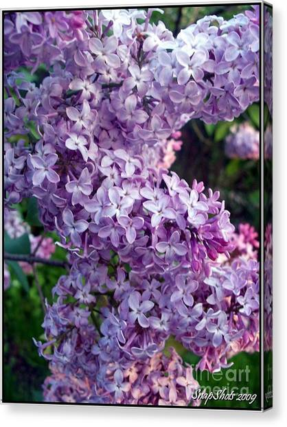Lilacs Canvas Print by Emily Kelley