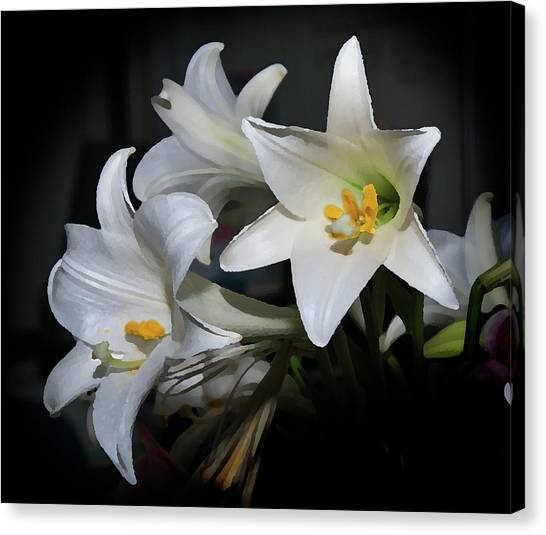 Lillies Canvas Print