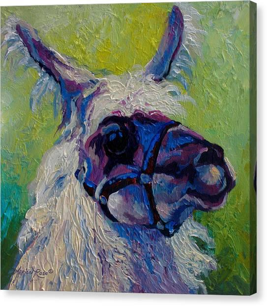 Ewe Canvas Print - Lilloet - Llama by Marion Rose