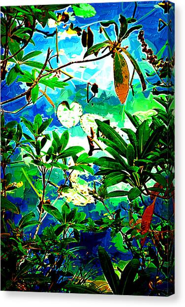 Lilly Pods Canvas Print