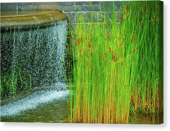 Lilly Pond In Battery Park Canvas Print