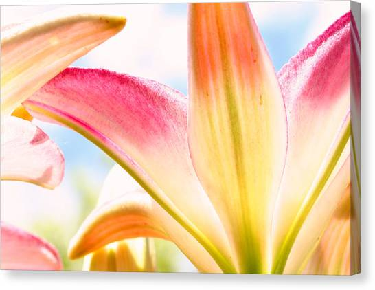 Lily And Clouds Canvas Print