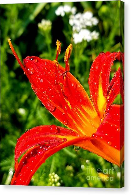 Lily And Raindrops Canvas Print