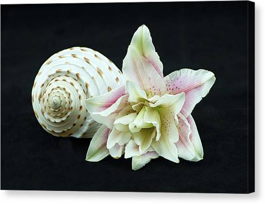 Lily And Shell Canvas Print