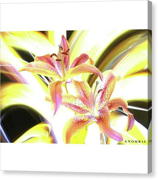 Lilies Canvas Print - Lily Burst #flower #notphotoshop by Andrew Nourse