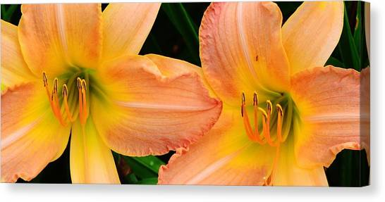Lily Duo Canvas Print