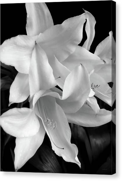 Lily Flowers Black And White Canvas Print