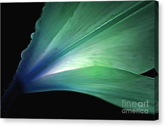 Daylily Canvas Print - Lily Glow by Krissy Katsimbras