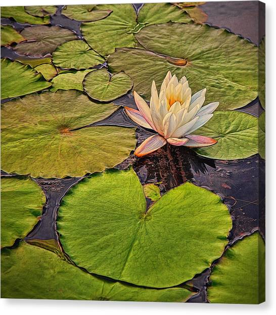Lily In The Pads Canvas Print