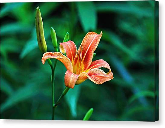 Lily In Woods Canvas Print