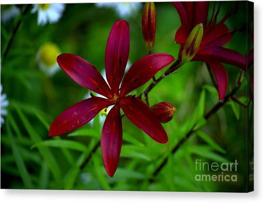 Lily Maroon Canvas Print by The Stone Age