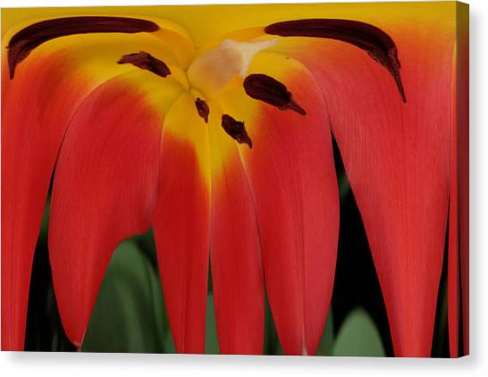 Lily Melting Canvas Print