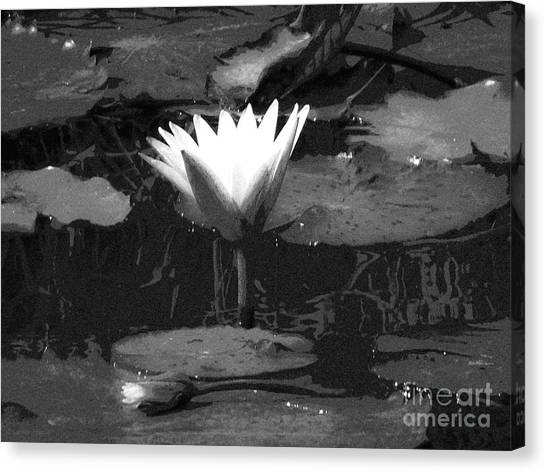 Lily Of The Lake Canvas Print