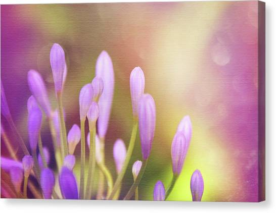 Lily Canvas Print - Lily Of The Nile Buds In Summer  by Carol Japp