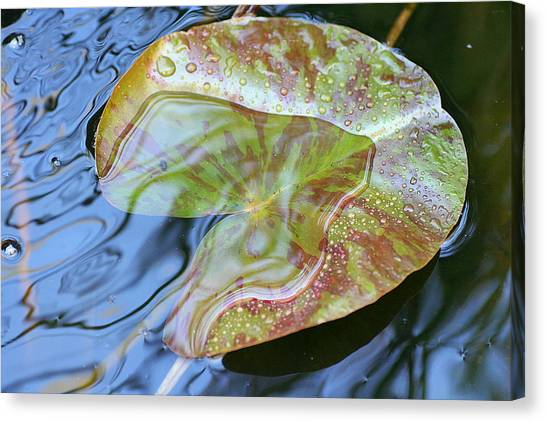 Lily Pad On The Pond Canvas Print by Kerry Reed
