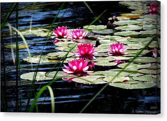 Lily Pads And Wildflowers Canvas Print