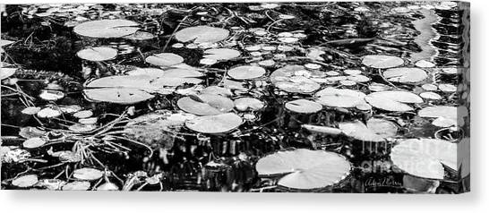 Lily Pads, Black And White Canvas Print