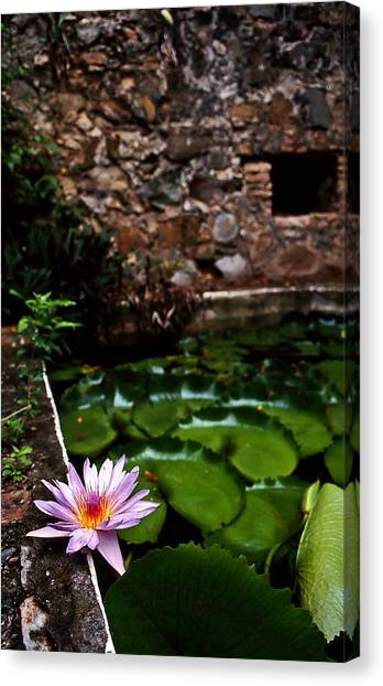 Lily Pond In Ruins. Usvi Canvas Print