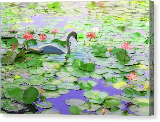 Lily Swan Canvas Print