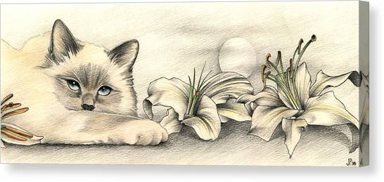Lily The Birman Canvas Print