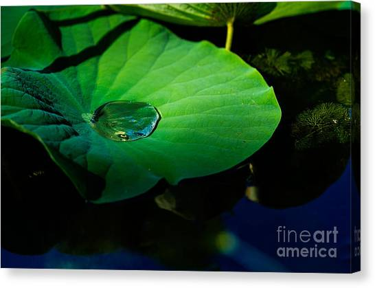 Lily Water Canvas Print