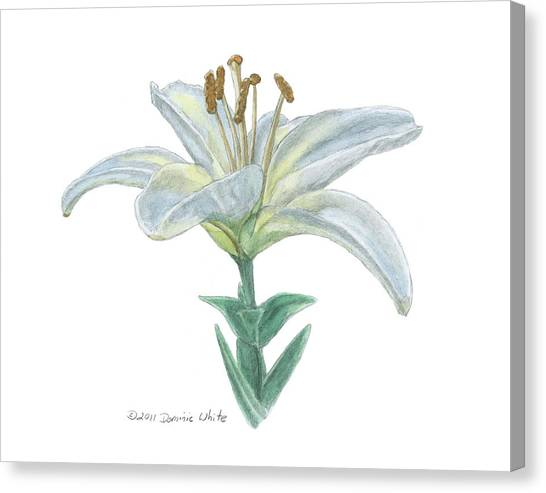 Lily Watercolor Canvas Print