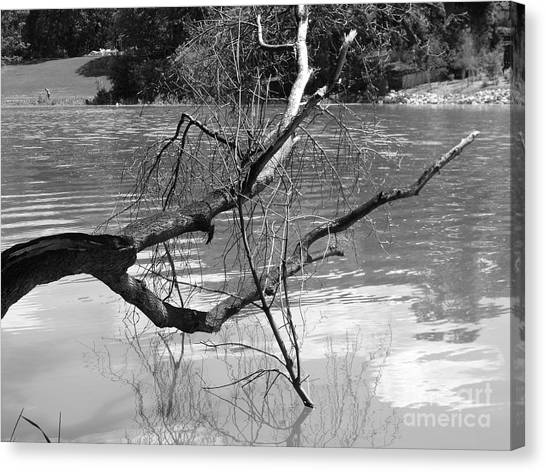 Limb Over Water Canvas Print by Angela Christine