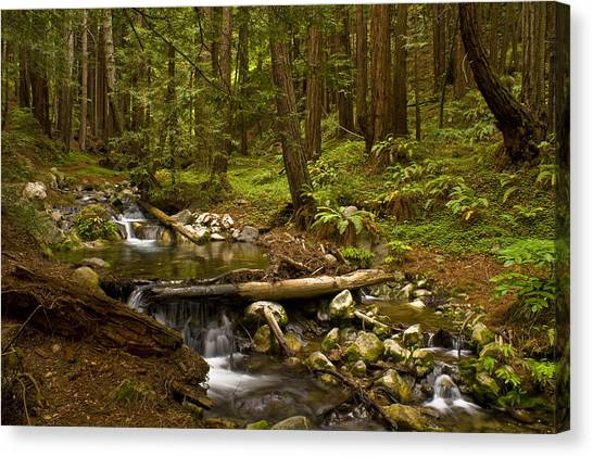 Lime Kiln Creek 1 Canvas Print