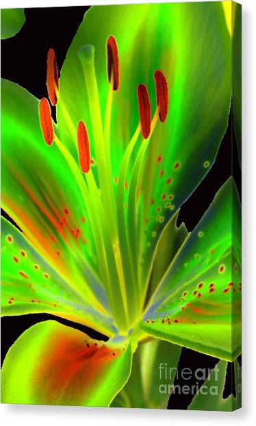 Lime Twist Canvas Print